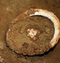 Ablone shell containing red ochre rich mixture. Image by Grethe Moell Pedersen. (Click on image to view larger.)