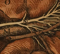 Detail from plate from of De lactibus sive lacteis venis.  Click to see and resize image of entire page.