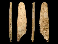 A bone tool known as a lissoir, possibly used to prepare animal skins. Image courtesy of the Abri Peyrony and Pech de l'Azé I Projects. (Click on image to view larger.)