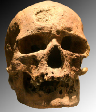 Cro Magnon skull. (Click on image to view larger.)