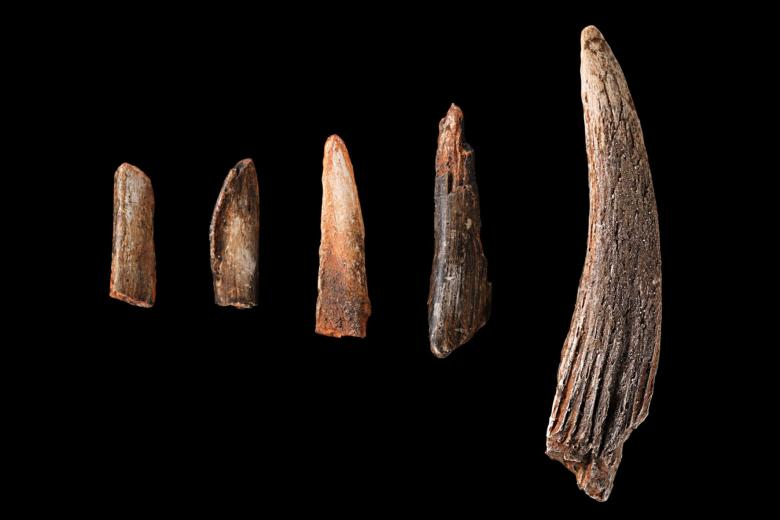 Early man tools and weapons information